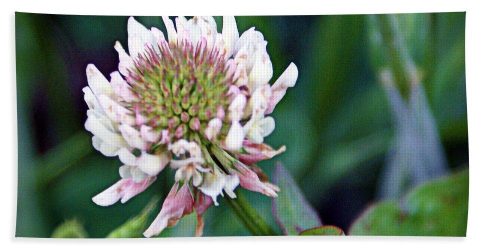 Clover Bath Sheet featuring the photograph Clover Blossom by Cricket Hackmann