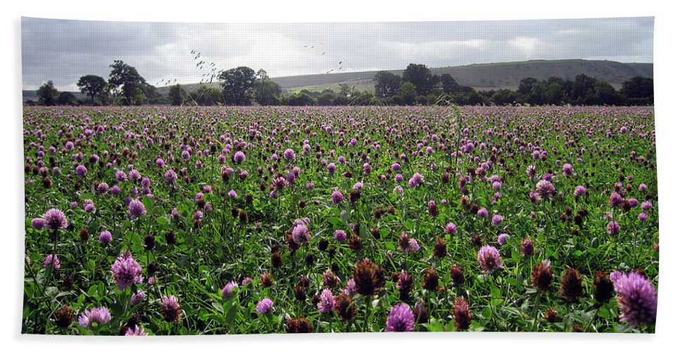 Flowers Hand Towel featuring the photograph Clover Field Wiltshire England by Kurt Van Wagner