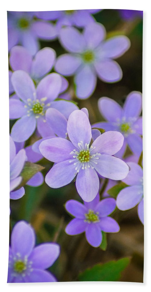 Wildflower Hand Towel featuring the photograph Clump Of Springtime by Bill Pevlor