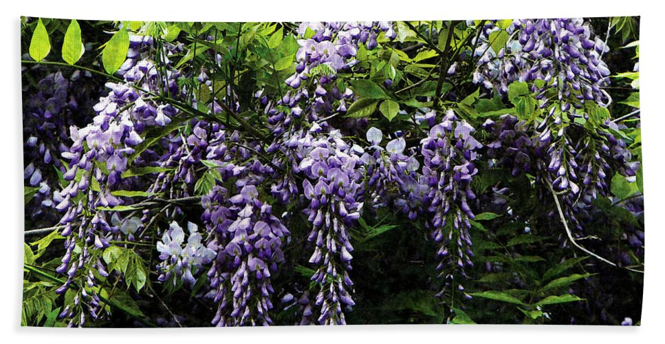 Wisteria Bath Sheet featuring the photograph Clusters Of Wisteria by Susan Savad