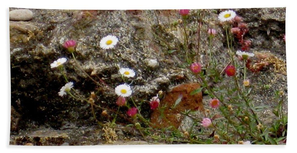 Coast Hand Towel featuring the photograph Coastal Wildflowers 1 by Marta Robin Gaughen