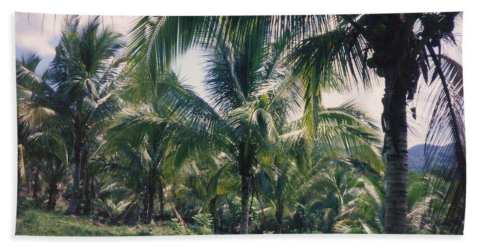 Jamaica Hand Towel featuring the photograph Coconut Farm by Debbie Levene