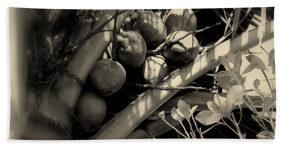 Coconuts Hand Towel featuring the photograph Coconuts by Susanne Van Hulst
