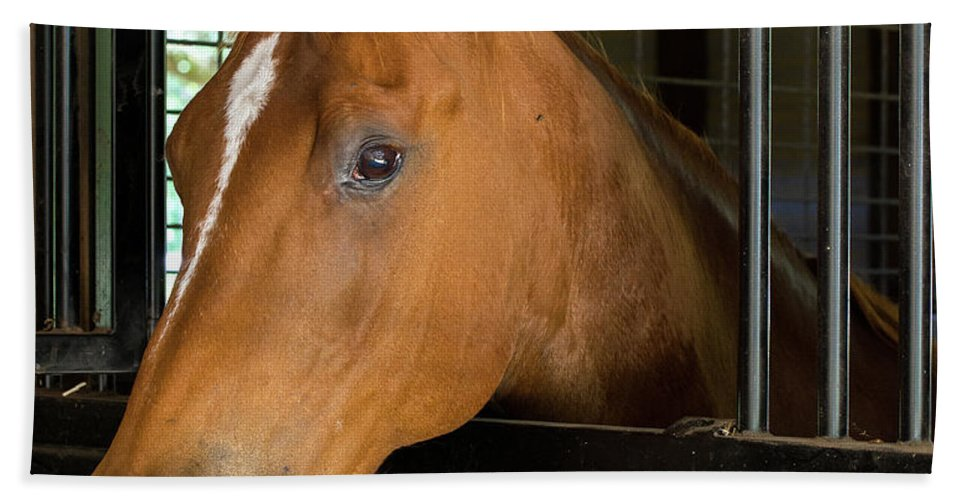 Horse Bath Sheet featuring the photograph Col Snickers by Julie Blackburn
