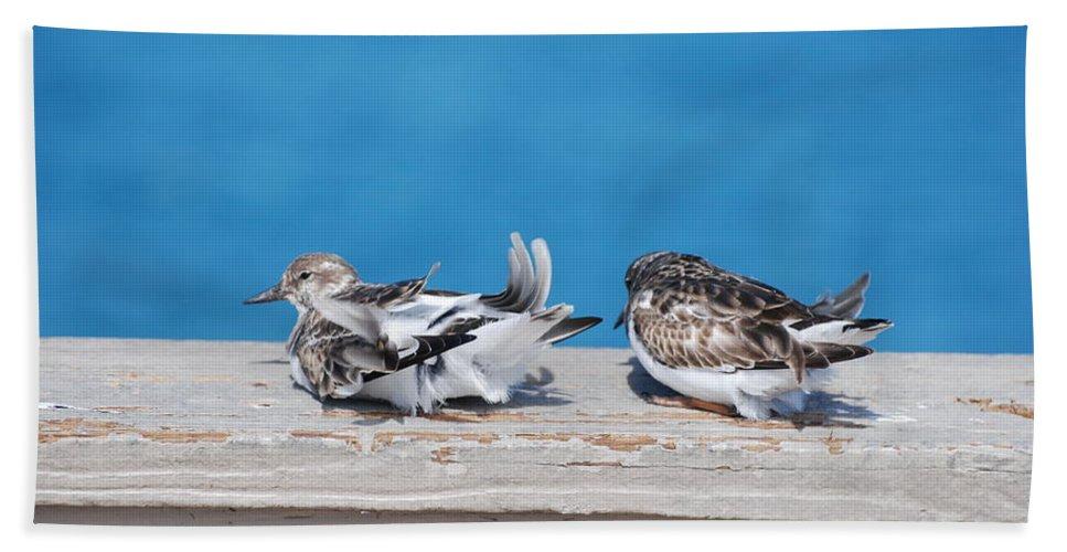 Bird Bath Towel featuring the photograph Cold Birds by Rob Hans