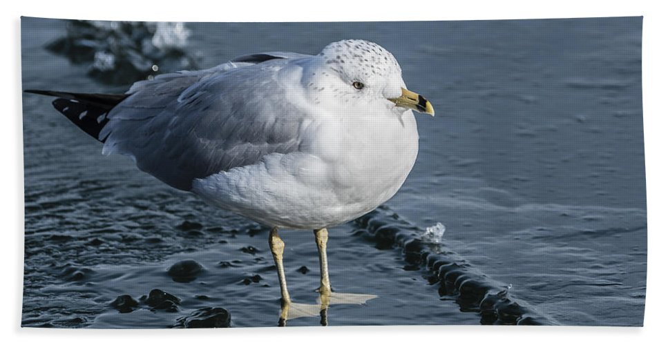 Seagull Hand Towel featuring the photograph Cold Feet by Joann Long