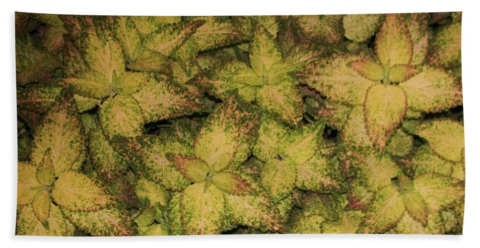 Coleus Hand Towel featuring the painting Coleus Plants Pennsylvania Gardens by Eric Schiabor