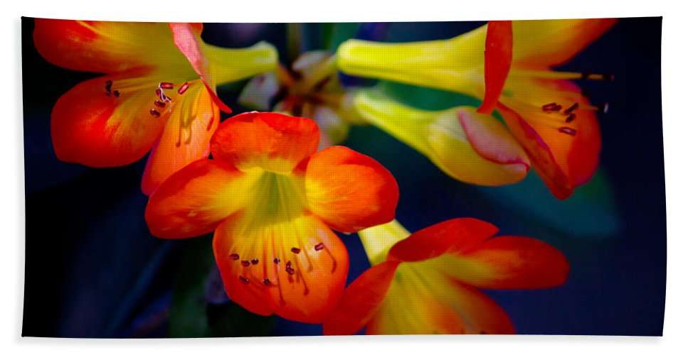 Flower Hand Towel featuring the photograph Color Burst by Mark Andrew Thomas