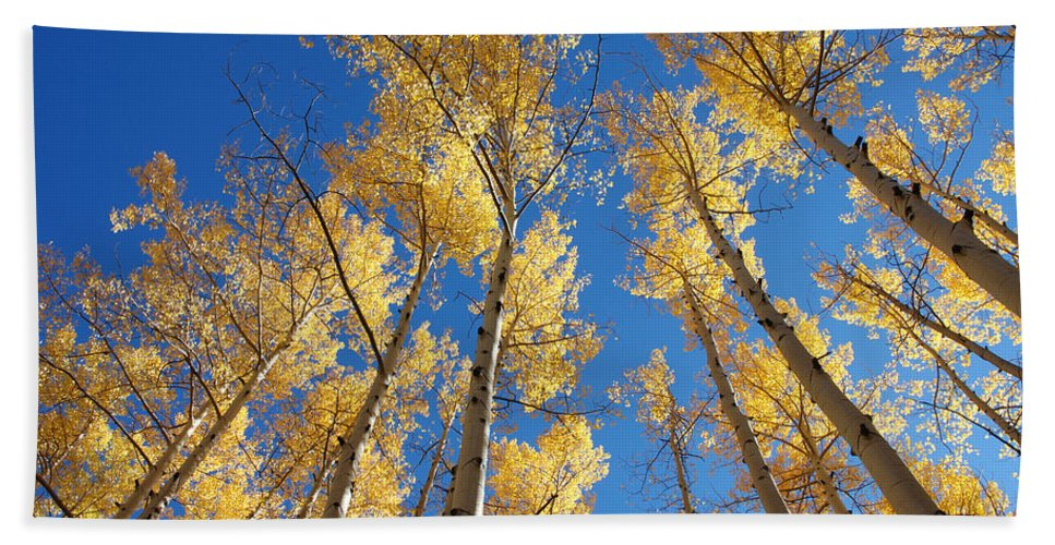 Aspen Hand Towel featuring the photograph Colorado Aspen by Jerry McElroy