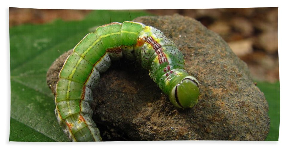 Colorful Caterpillar Images Colorful Caterpillar Prints Unidentified Caterpillar Images Unidentified Caterpillar Prints Forest Ecology Entomology Biodiversity Nature Oldgrowth Forest Preservation Beech Trees Hand Towel featuring the photograph Colorful Caterpillar by Joshua Bales