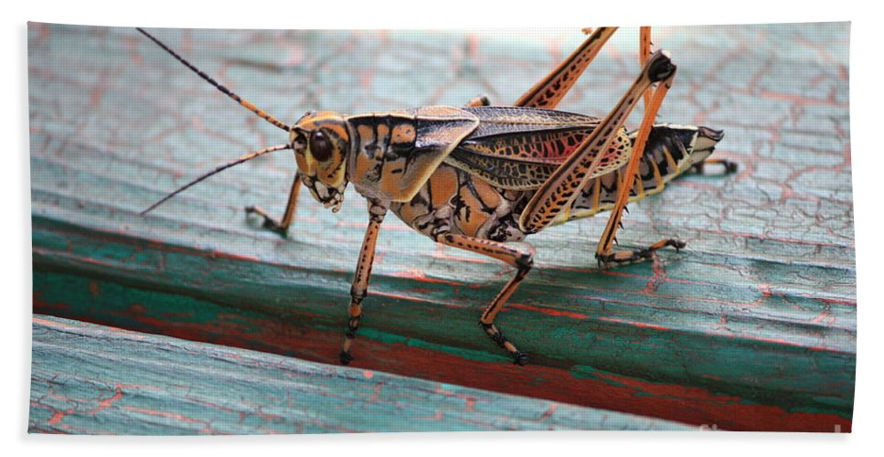 Insects Bath Sheet featuring the photograph Colorful Grasshopper by Carol Groenen