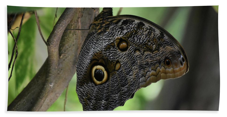 Blue-morpho Bath Sheet featuring the photograph Colorful Markings On A Blue Morpho Butterfly On A Tree Trunk by DejaVu Designs