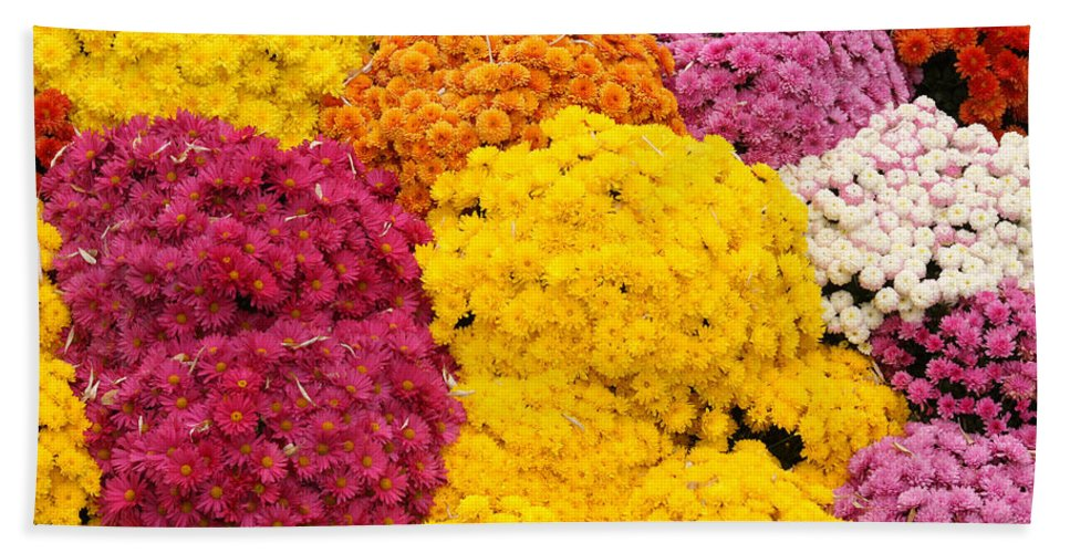 Flowers Hand Towel featuring the photograph Colorful Mum Flowers Fine Art Abstract Photo by James BO Insogna