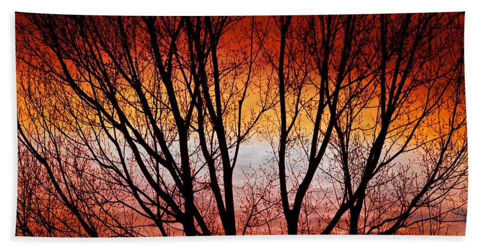 Silhouette Hand Towel featuring the photograph Colorful Tree Branches by James BO Insogna