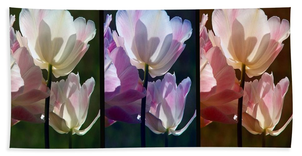 Coloured Tulips Hand Towel featuring the photograph Coloured Tulips by Robert Meanor
