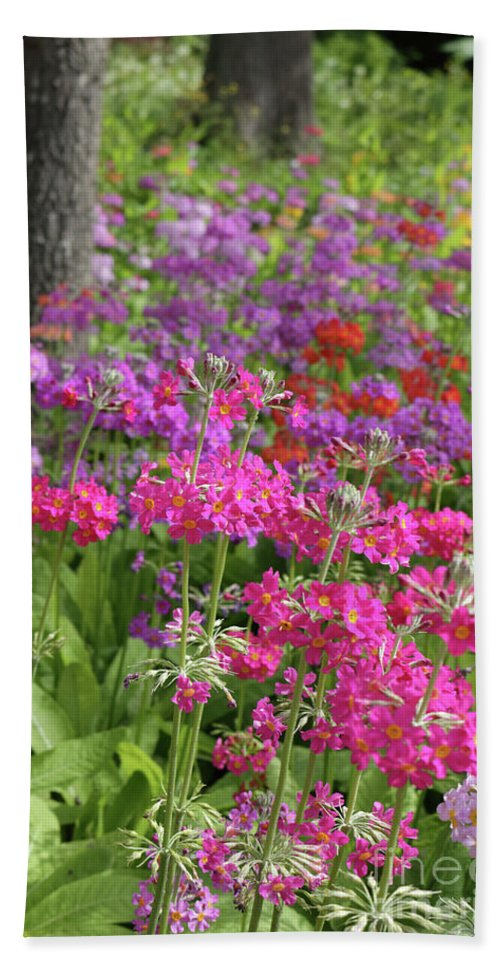 Primula Candelabra At Wisley Gardens Surrey Bath Sheet featuring the photograph Colourful Primula Candelabra At Wisley Gardens Surrey by Julia Gavin