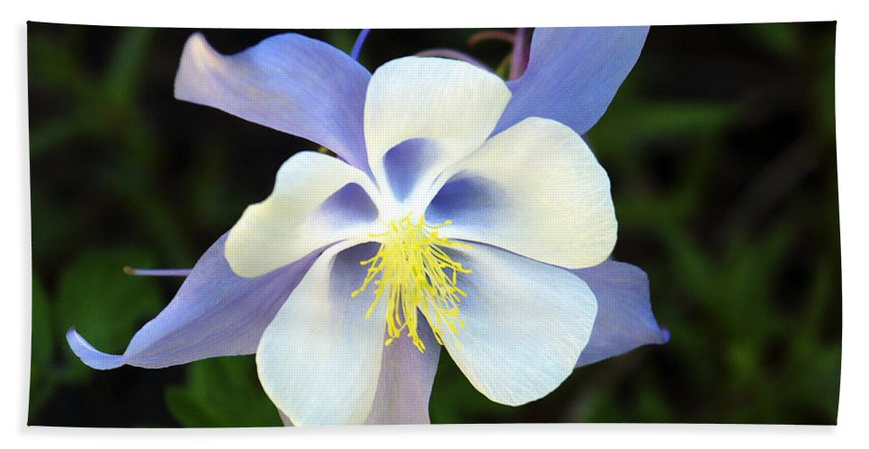 Columbine Bath Sheet featuring the photograph Columbine Colorado State Flower by Marilyn Hunt
