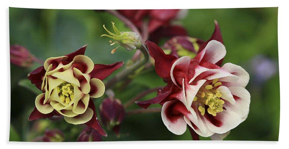 Flowers Bath Towel featuring the photograph Columbine In Spring by Deborah Benoit