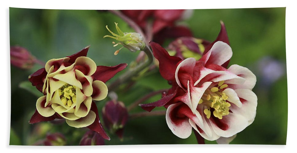 Flowers Bath Sheet featuring the photograph Columbine In Spring by Deborah Benoit