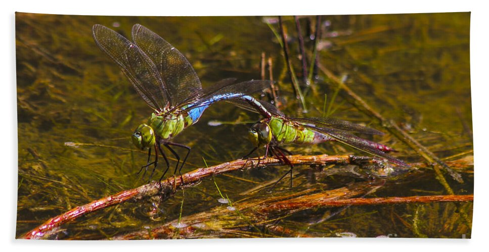 Reid Callaway Dragonflies Bath Sheet featuring the photograph Come Along With Me Dragonflies by Reid Callaway