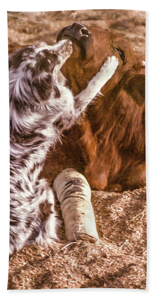 Dog Hand Towel featuring the photograph Comforting The Heifer With A Broken Leg by Elizabeth Hershkowitz