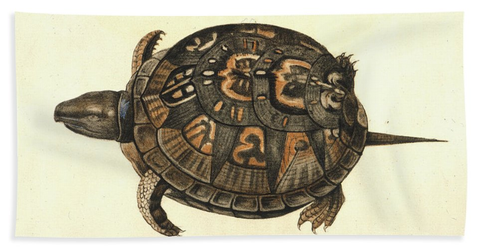 1585 Bath Sheet featuring the photograph Common Box Tortoise, 1585 by Granger