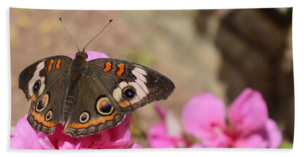 Butterfly Hand Towel featuring the photograph Common Buckeye Butterfly by Aimee L Maher ALM GALLERY