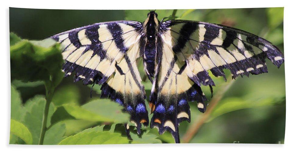 Butterfly Bath Sheet featuring the photograph Common Yellow Swallowtail by Deborah Benoit