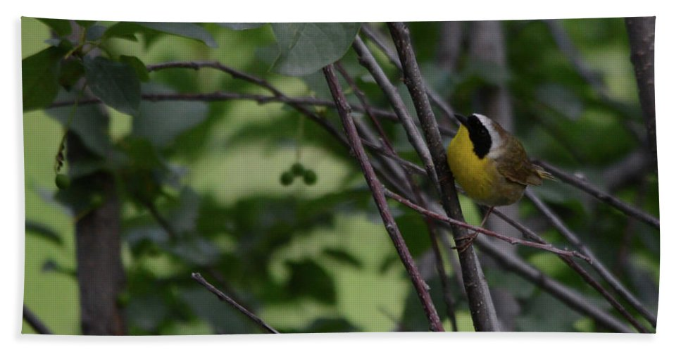 Warbler Bath Sheet featuring the photograph Common Yellowthroat by Whispering Peaks Photography