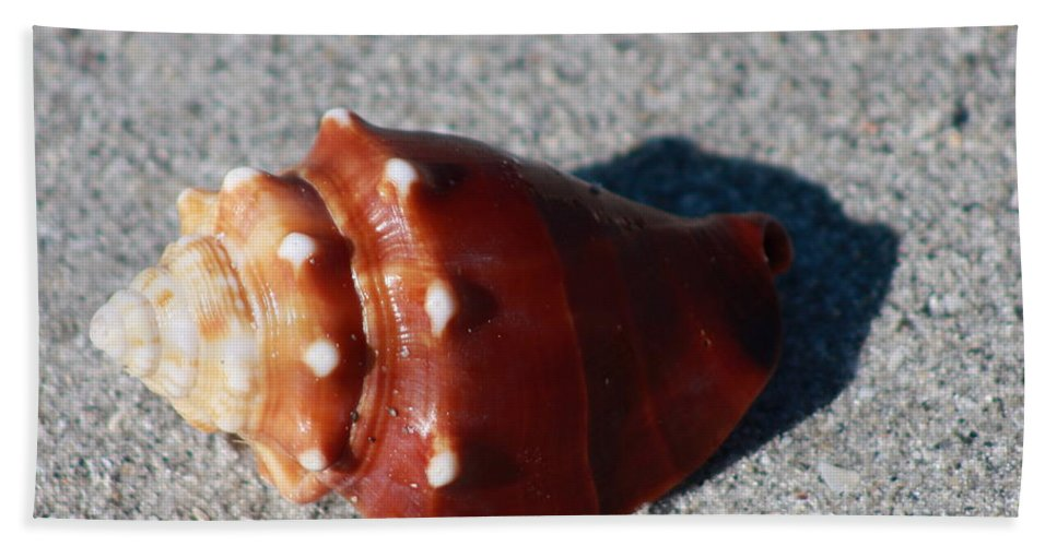 Conch Bath Sheet featuring the photograph Conch by Christiane Schulze Art And Photography