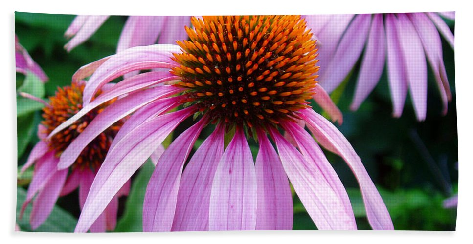 Coneflowers Bath Sheet featuring the photograph Three Coneflowers by Nancy Mueller