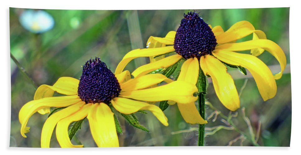 Wildflower Bath Sheet featuring the photograph Coneflowers by Dragonfleyes Photography and Creations