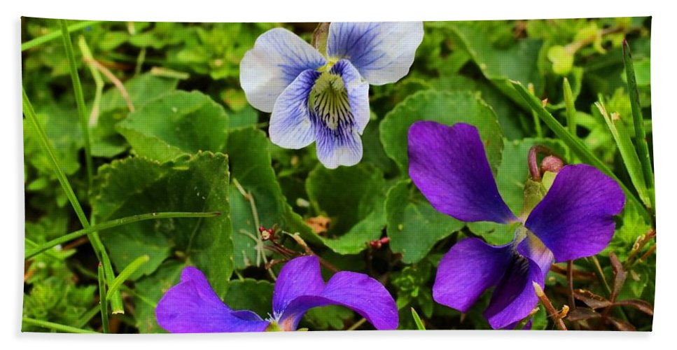 Violets Hand Towel featuring the photograph Confederate And Purple-blue Violets by Kathryn Meyer