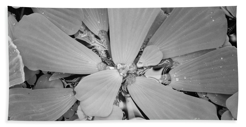 Nature Bath Sheet featuring the photograph Conservatory Nature In Black And White 1 by Carol Groenen