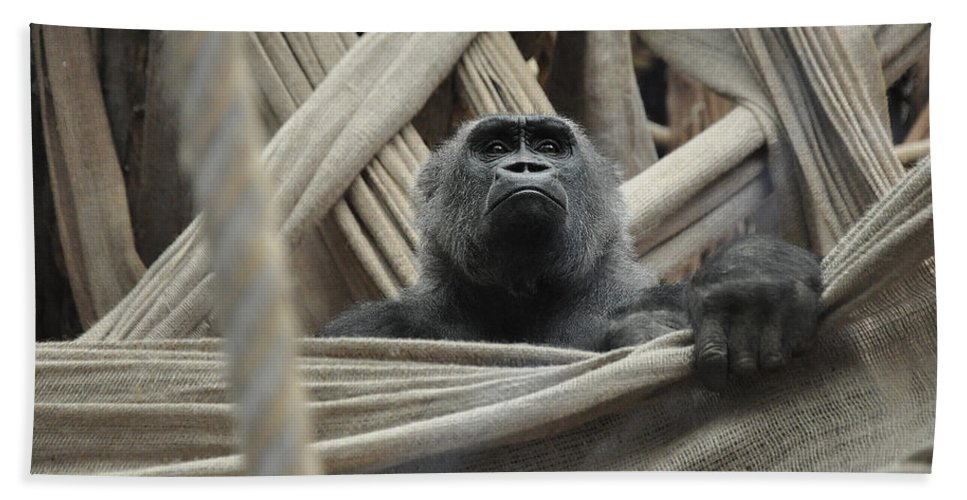 Gorilla Hand Towel featuring the photograph Contemplate by Caroline Reyes-Loughrey