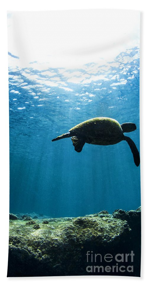 Underwater Hand Towel featuring the photograph Contemplation - Triptych  Part 2 Of 3 by Sean Davey