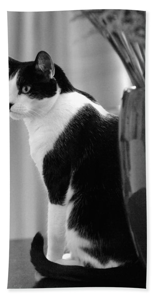 Black And White Bath Sheet featuring the photograph Contemplative Cat Black And White by Jill Reger