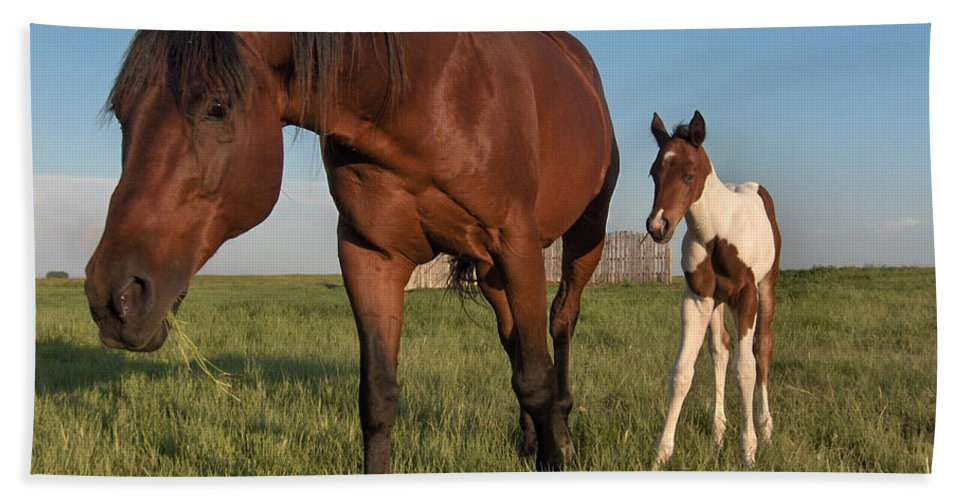 Horse Colt Baby Animals Herd Filly Ranch Farm Life Pasture Bath Sheet featuring the photograph Contentment by Andrea Lawrence
