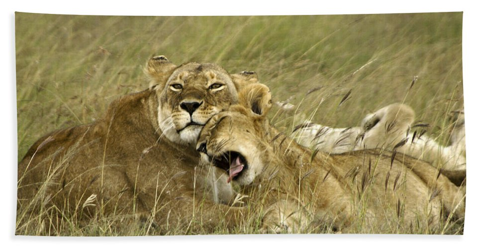 Africa Hand Towel featuring the photograph Contentment by Michele Burgess