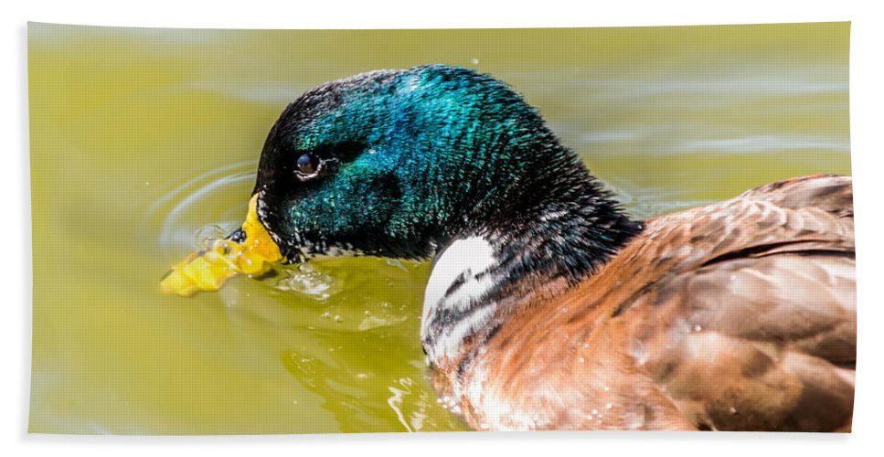 Duck Hand Towel featuring the photograph Cool Off The Bill by Leticia Latocki