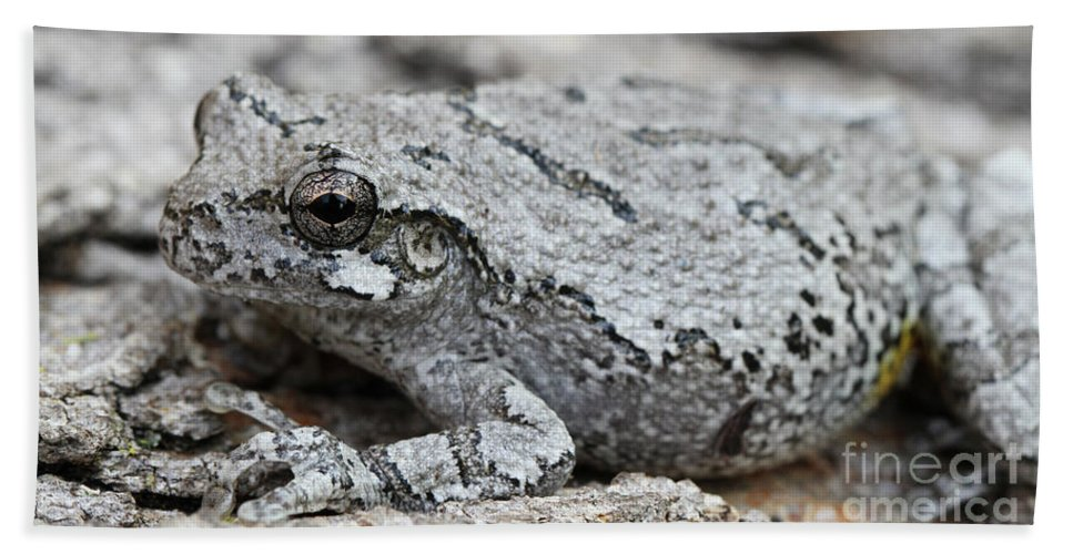 Frog Bath Sheet featuring the photograph Cope's Gray Tree Frog #5 by Judy Whitton