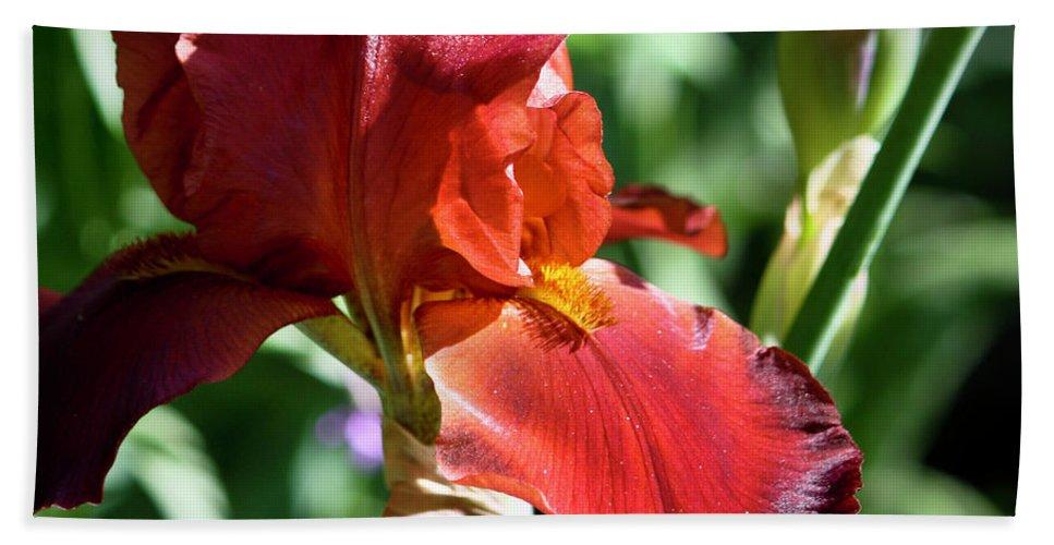 Iris Bath Sheet featuring the photograph Copper Iris Squared 1 by Teresa Mucha