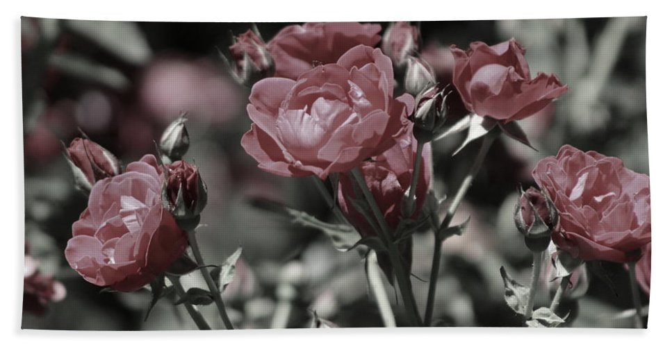 Copper Pink Rose Bath Towel featuring the photograph Copper Rouge Rose in Almost Black and White by Colleen Cornelius