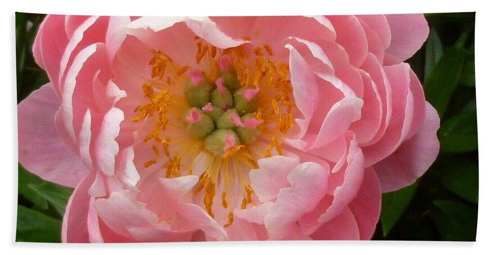 Flower Macro Bath Sheet featuring the photograph Coral 'n' Gold by Lingfai Leung