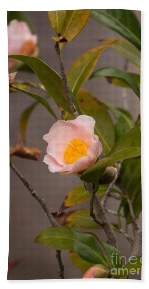 Coral Camellia Hand Towel featuring the photograph Coral Camellia by Marta Robin Gaughen