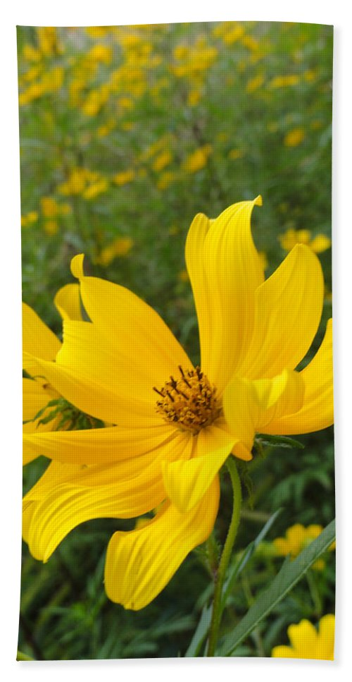 Coreopsis Hand Towel featuring the photograph Coreopsis by Trish Hale