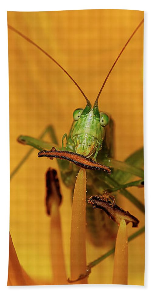 Bug Bath Sheet featuring the photograph Corn On The Cob by Lois Bryan