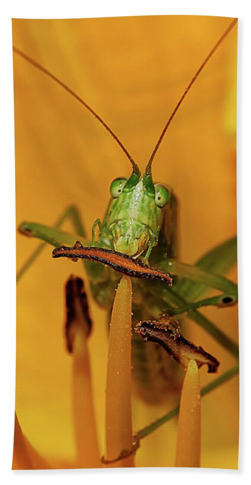 Bug Hand Towel featuring the photograph Corn On The Cob by Lois Bryan