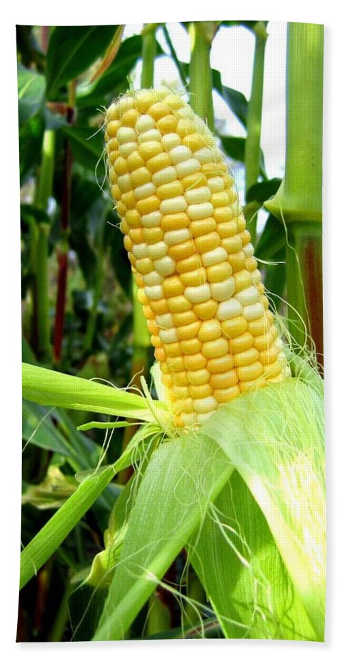 Corn Hand Towel featuring the photograph Corn On The Cob by Will Borden
