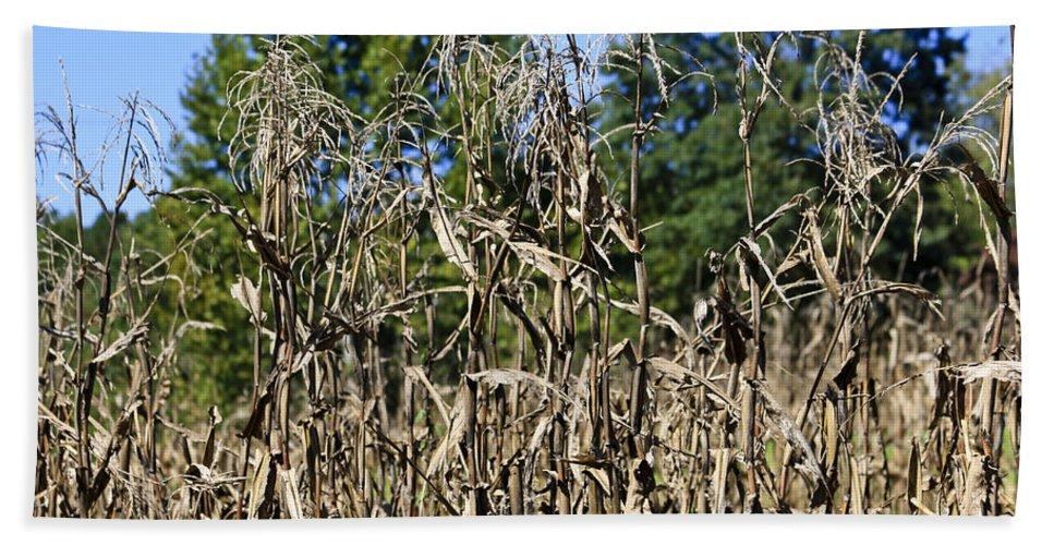 Corn Bath Sheet featuring the photograph Corn Stalks Drying by Teresa Mucha